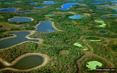 Ky thu khu tu nhien hoang da Pantanal - Brazil - Anh 7