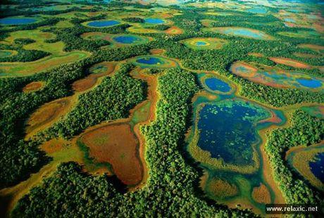 Ky thu khu tu nhien hoang da Pantanal - Brazil - Anh 8