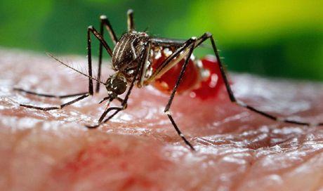 Mot tre 4 tuoi o Long An nhiem virus Zika - Anh 1