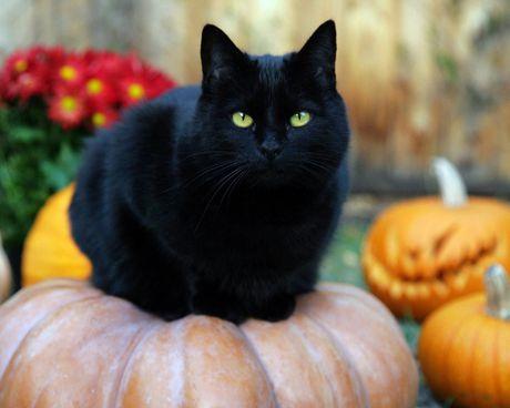Nhung truyen thuyet muon doi bi an ve Halloween - Anh 3