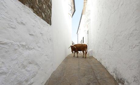 Can canh nhung 'ngoi lang trang' o Tay Ban Nha - Anh 7