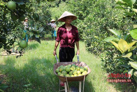 Cam Bai Phu dau mua duoc gia - Anh 5