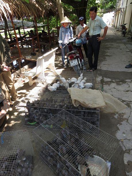 Tha 150 con chim va 7kg rua, ba ba cac loai ve Vuon Quoc gia Tram Chim - Anh 1