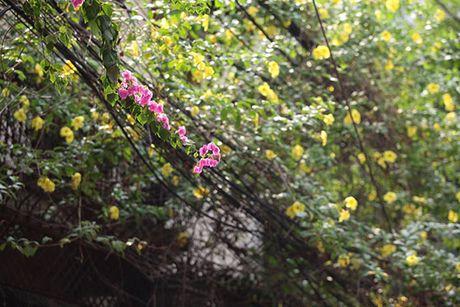 Nhung gian hoa giay khien Ha Noi tro nen tho hon - Anh 2