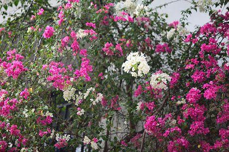 Nhung gian hoa giay khien Ha Noi tro nen tho hon - Anh 4