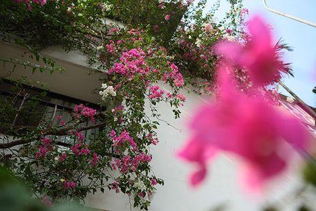Nhung gian hoa giay khien Ha Noi tro nen tho hon - Anh 5