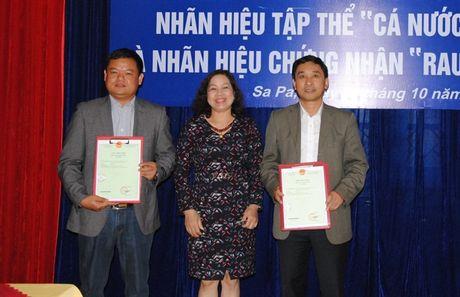 Cong bo nhan hieu tap the 'Ca nuoc lanh Sa Pa' - Anh 1