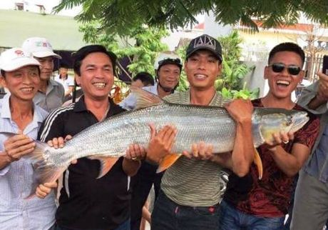 Clip: Can canh ca mang dai 1,2m hiem thay mac cau can thu Hai Phong - Anh 1