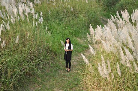 Canh dong co lau tho mong giua long Ha Noi - Anh 3
