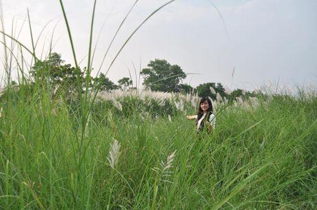 Canh dong co lau tho mong giua long Ha Noi - Anh 5