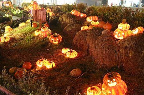 Dac sac khu vuon bi ngo Halloween than tien - Anh 5