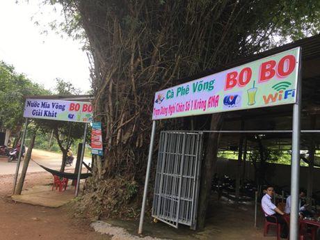 'Cu tre' co thu hon 50 nam tuoi loi cuon du khach o Dak Lak - Anh 6