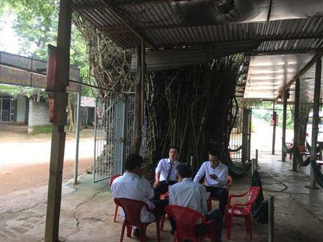 'Cu tre' co thu hon 50 nam tuoi loi cuon du khach o Dak Lak - Anh 7