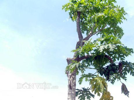 Bat ngo cay du du nam nghieng van cho triu qua - Anh 1