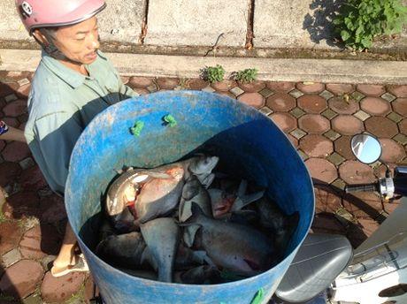 Ha Noi: Hang tan ca to chet noi o ho Linh Dam - Anh 7