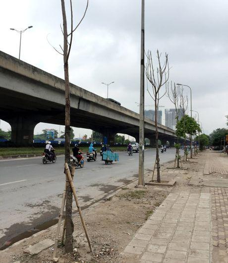 De nghi 'cam cua' nha thau trong cay chet kho tren duong Nguyen Xien - Anh 1