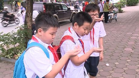 Ha Noi: Hat nhua no doc hai o at tai xuat o cong truong hoc - Anh 6