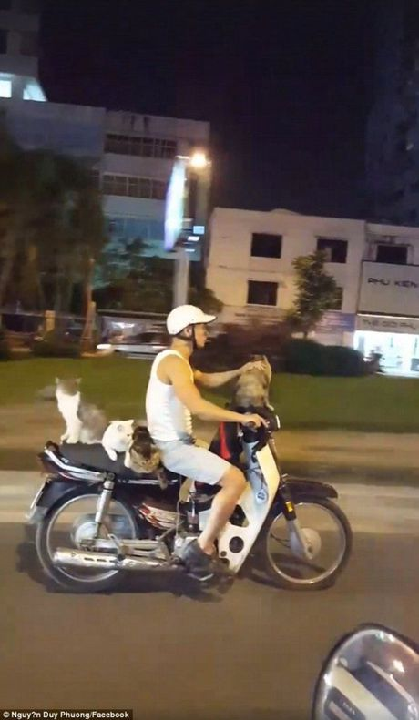 Bao Anh kinh ngac thanh nien Viet Nam di xe may cho 4 chu meo - Anh 1
