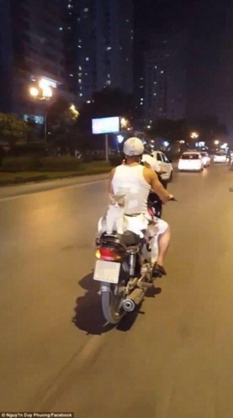 Bao Anh kinh ngac thanh nien Viet Nam di xe may cho 4 chu meo - Anh 2