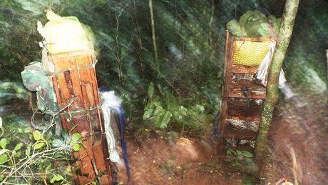 Quang Binh: Phat hien vu van chuyen trai phep dong vat rung quy hiem tai Phong Nha – Ke Bang - Anh 1