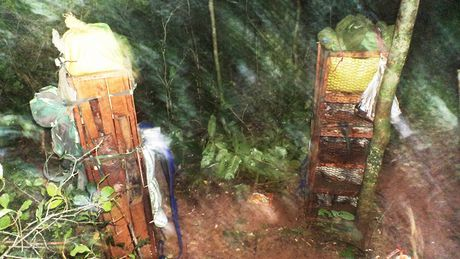 Quang Binh: Phat hien vu van chuyen trai phep dong vat rung quy hiem tai Phong Nha – Ke Bang - Anh 2