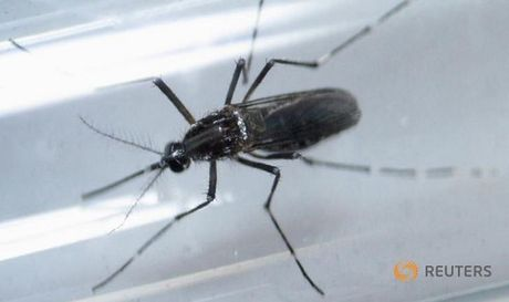 Xac nhan truong hop dau tien nhiem Zika o Myanmar - Anh 1