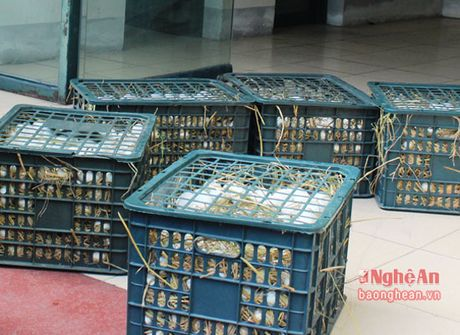 Bat giu 6.000 gia cam, 1.500 qua trung lau tren xe khach Bac Nam - Anh 1