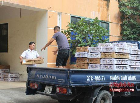 Bat giu 6.000 gia cam, 1.500 qua trung lau tren xe khach Bac Nam - Anh 2
