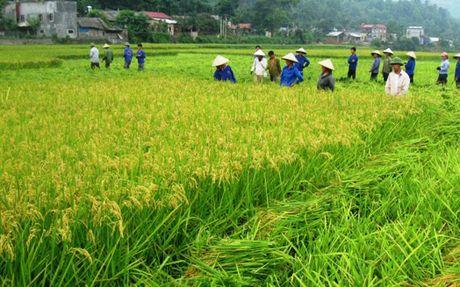 Chinh phu duoc de nghi manh tay thu hoi dat nong nghiep lang phi - Anh 1