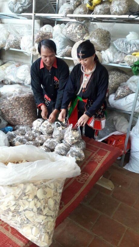 Noi danh Ha Thanh nho bai thuoc chua xuong khop nguoi Dan toc Dao - Anh 2