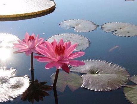 Cach dung hoa sung mien Tay chua nhieu benh tat - Anh 2
