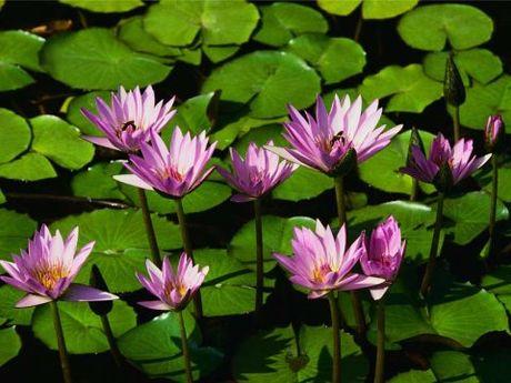 Cach dung hoa sung mien Tay chua nhieu benh tat - Anh 9