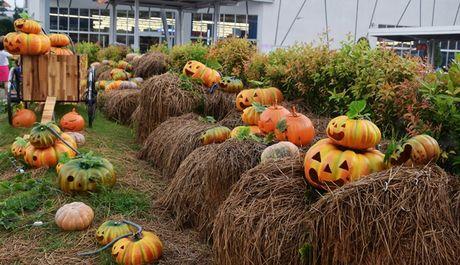 Vuon bi ngo hut khach dip Halloween o Sai Gon - Anh 1