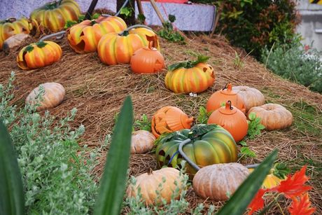 Vuon bi ngo hut khach dip Halloween o Sai Gon - Anh 3