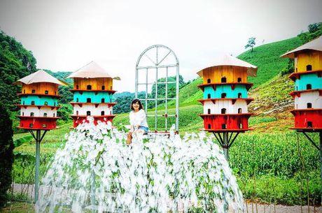 Thung lung hoa dep nhu mo o thien duong Moc Chau - Anh 6