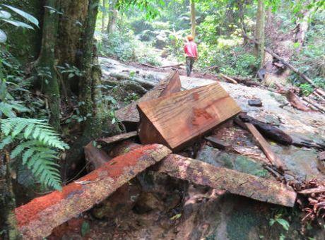 'Lam tac' tan pha rung dem Di san Phong Nha: Duong di ngap go lau - Anh 3