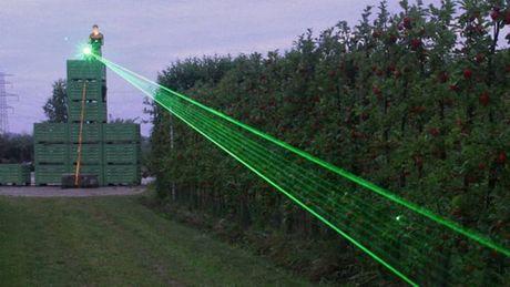 Dung laser duoi chuot bao ve mua mang - Anh 1