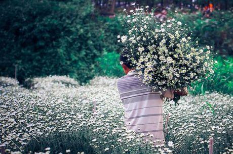 Thang 10, 11 ve: Di qua nhung mua hoa than thuong! - Anh 3