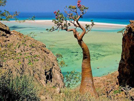 Kham pha Socotra - Hon dao duoc vi nhu hanh tinh khac tren trai dat - Anh 4