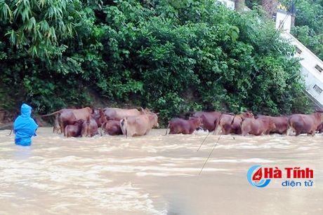 Vu Quang 'chay' lu, Huong Son de phong xa tran thuy dien - Anh 3