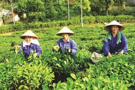 Bac Quang day manh tai co cau nong nghep - Anh 7