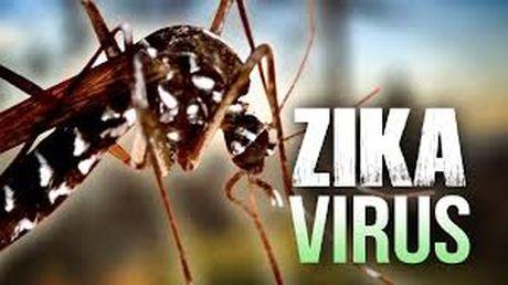 Virus Zika co the gay vo sinh cho dan ong - Anh 1