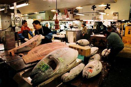 Tham cho ca ngu Tsukiji lon nhat the gioi - Anh 1