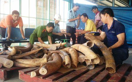 Them 2 container nga voi giau trong go nhap tu Chau Phi - Anh 1