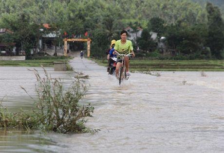 Dan Quang Nam cuong cuong di doi trau bo, tai san lo thuy dien xa lu ngap lut ha du - Anh 3