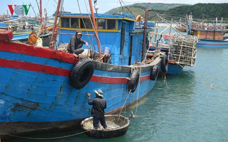 Ngu dan Ha Tinh nhan tien den bu sau su co Formosa - Anh 1
