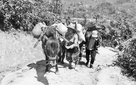 "Hanh trinh ""khuat phuc"" Bach Moc Luong Tu dinh nui cao thu ba Viet Nam - Anh 2"
