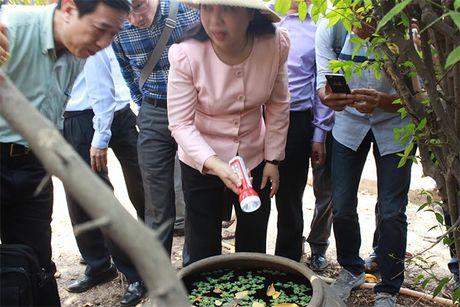 UBND TP Ho Chi Minh hop khan ve phong chong dich Zika - Anh 1