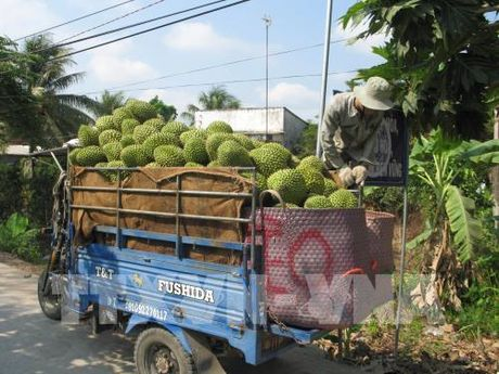 Gia sau rieng tang manh - Anh 1