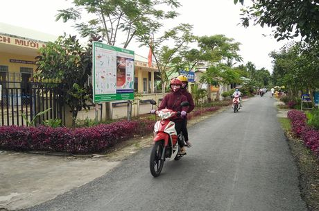 Long Tri A tang nang suat nho canh dong lon - Anh 2
